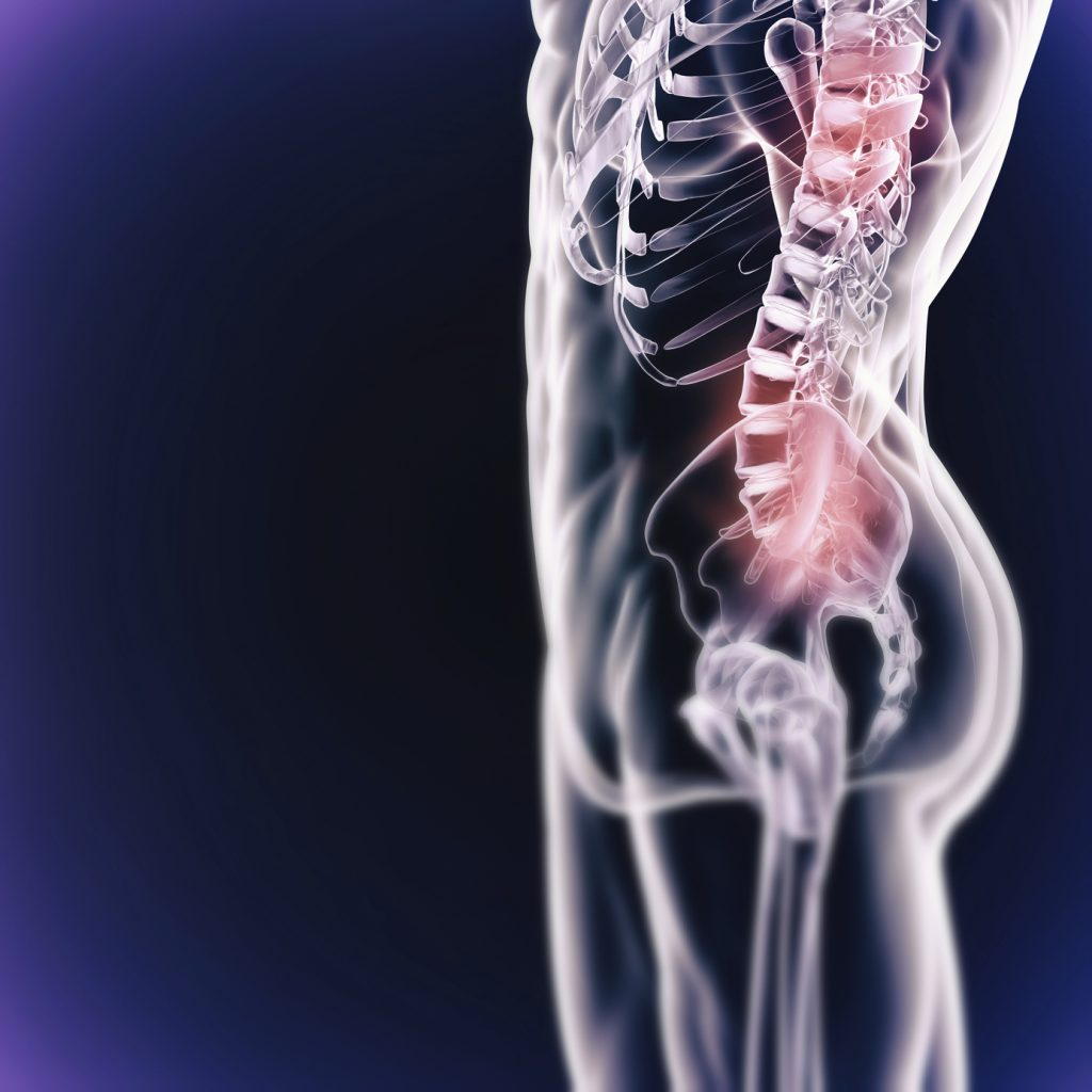 A cropped view of the hips, legs and spine isolated on a blue background